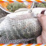 Umpan Sangat Galak Ikan Nila Liar Danau, Tambak Dan Sungai