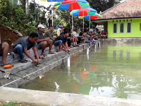 MelihatTeknik Mancing Ikan MasSang Juara Lomba