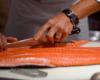 Racikan Umpan Ikan Mas Bahan Dasar Salmon